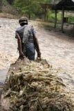 Remorquer la canne à sucre Photographie stock libre de droits