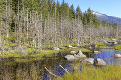 Remote Alaskan wildeness near Juneau Stock Photography