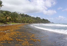 Remote black sand beach, Dominica, Caribbean Islands Royalty Free Stock Photo