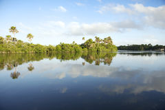 Remote Brazilian Lazy River Calm Reflection Stock Photos