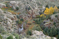 Remote canyon color. Fall turning a grove of trees in a remote canyon a beautiful yellow stock photos