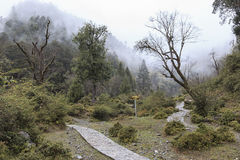 Remote foret in souther China home to the Yunnan Black Snub-Nosed Monkey Rhinopithecus Bieti.  Stock Photo