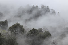 Remote foret in souther China home to the Yunnan Black Snub-Nosed Monkey Rhinopithecus Bieti.  Stock Photos