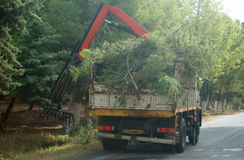 Remote manipulator collecting trees. Stock Photography