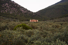 Remote mountain house sourrounded by olive trees Royalty Free Stock Photos