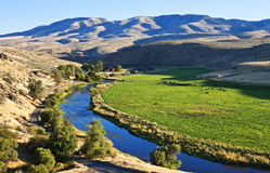 Remote ranch, Powder River, Oregon. Remote ranch panorama with cattle on the Powder River along Highway 86 east of Baker City, Oregon royalty free stock images