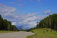 Remote Road Alaska Highway Canada stock photo