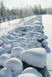 Remote snow-covered bushes in winter park.  Stock Photography