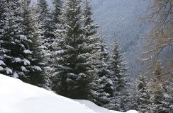 Remote snowy hillside with forest in background Stock Image