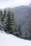 Remote snowy hillside with forest in background Royalty Free Stock Photography
