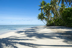 Remote Tropical Brazilian Beach Palm Tree Shadows Royalty Free Stock Photos