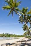 Remote Tropical Brazilian Beach Palm Trees Stock Image