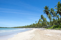 Remote Tropical Brazilian Beach Palm Trees Stock Photography