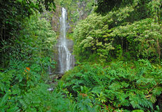 Remote waterfall in rainforest in Hawaii Royalty Free Stock Images