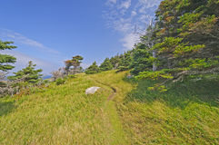 Remote Wind Blown Trail on an Ocean Coast Royalty Free Stock Photography