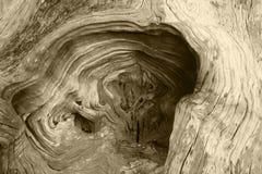 Remous en bois de texture de fond organiques image libre de droits