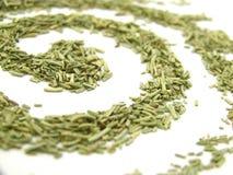 Remous sec de Rosemary, horizontal Images libres de droits