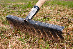Removal of the old grass with rake Stock Photos