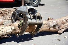 Remove fallande träd efter hård storm från asfaltvägen Harveste royaltyfri fotografi