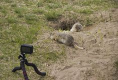 We remove the gopher on a video camera stock photos
