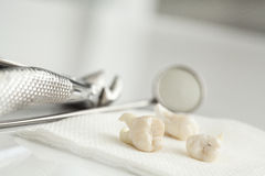 Removed wisdom tooth on white. Removed wisdom tooth on the white table Royalty Free Stock Photography
