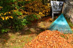Removendo as folhas de outono da folha Fotografia de Stock