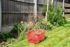 Removendo ervas daninhas de uma beira em um jardim Imagens de Stock Royalty Free
