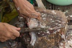 Removendo a faca de peixes das escalas de peixes Fotos de Stock