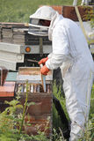 Removing Beehive Box Plate Stock Images