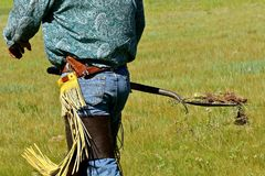 Removing cacti in a branding area. An unidentified cowboy in chaps removes prickly cactus in a shovel in an area where a branding is to occur stock image