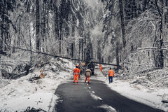 Removing crushing trees because of sleet. Devastating sleet has been crushing trees under its weight Stock Images