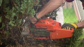 Removing dead garden trees using chainsaw