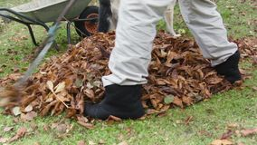 Removing Fallen Leaves stock video footage