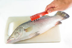 Removing fish scales using fish scaler. Royalty Free Stock Photo
