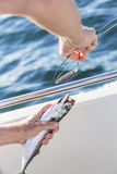 Removing lure from mackerel Stock Photography