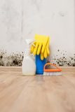 Removing mold allergy stock image
