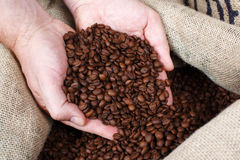Removing Roasted Coffee Beans Stock Photos