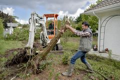Removing tree from garden Royalty Free Stock Photos