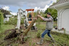 Removing tree from garden stock photos