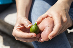 Removing wart on natural way with fig juice Royalty Free Stock Photos