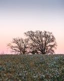 Remplié entre les gisements de fleur, les arbres voient le coucher du soleil sortir Image libre de droits