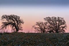Remplié entre les gisements de fleur, les arbres voient le coucher du soleil sortir Images libres de droits