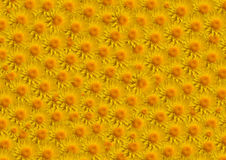 Remplissage de jaune de fleurs grand Photographie stock libre de droits