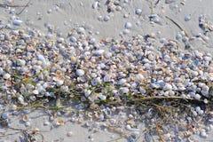 Remsa av skal på Sandy Beach royaltyfria foton
