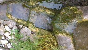 Ren naturlig vattenkälla stock video