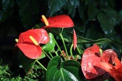 Ren orchid stock photos