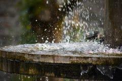 Ren sötvattenvattenfall i skog i bergen Gammal fontain stänger sig upp royaltyfri foto