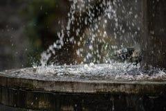 Ren sötvattenvattenfall i skog i bergen Gammal fontain stänger sig upp arkivbilder