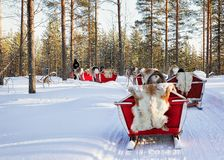 Ren Safari Sledding im Winter Forest Rovaniemi Finland Lapland stockfoto