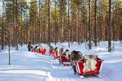 Ren Safari Sledge im Winter Forest Rovaniemi Finland Lapland lizenzfreies stockbild